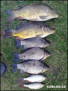 Rybářské úlovky za poslední dny